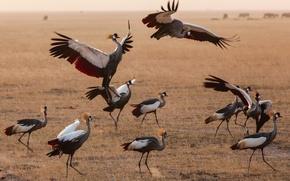 Картинка птицы, стая, Кения