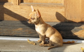 Картинка свет, лист, тень, собака, щенок