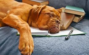 Картинка книги, собака, очки, спит, тетрадь