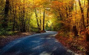 Картинка дорога, осень, лес, деревья