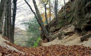 Картинка листва, Осень, autumn, leaves, fall