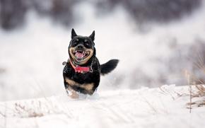 Картинка собака, зима, снег, друг