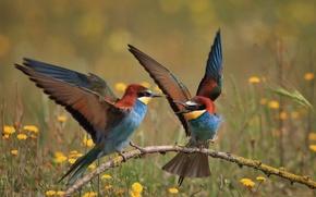 Картинка птицы, ветка, щурки