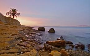 Картинка море, небо, закат, пальма, стена, берег