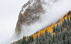 Обои лес, туман, гора