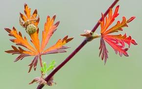 Картинка spider, leaves, branch