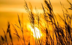 Картинка солнце, закат, травинки