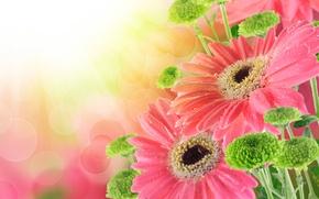 Картинка капли, букет, drops, гербера, bouquet, gerbera