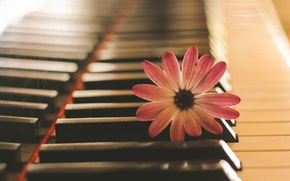Картинка цветок, музыка, пианино