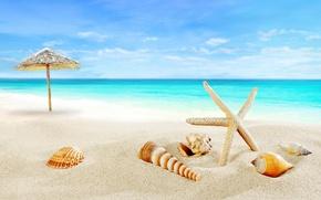 Обои paradise, берег, seashells, blue, sea, пляж, море, sand, песок, shore, beach, ракушки, summer, starfish