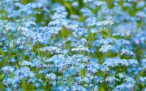 Обои цветы, природа, macro flowers