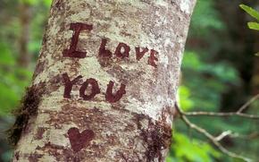 Картинка дерево, чувства, признание