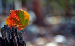 Картинка осень, макро, лист, блики, боке