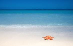 Картинка песок, пляж, океан, морская звезда