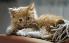 Картинка взгляд, рыжий, котёнок, рыжий котёнок