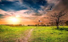 Картинка поле, птицы, город, вечер