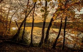 Картинка осень, лес, озеро