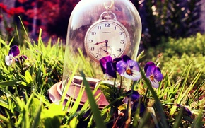 Картинка лето, трава, стекло, часы, Анютины глазки