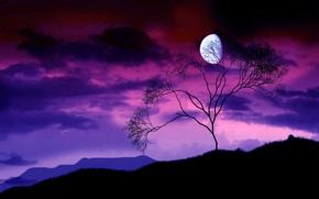 Обои дерево, ночь, луна, ветки, 156