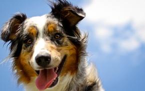 Картинка взгляд, морда, друг, собака