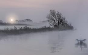 Картинка ночь, туман, озеро, лебедь
