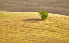 Картинка tree, shadow, farmland