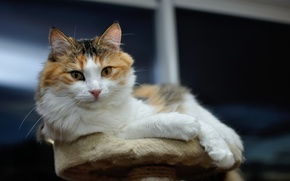 Картинка кот, лежит, мордашка