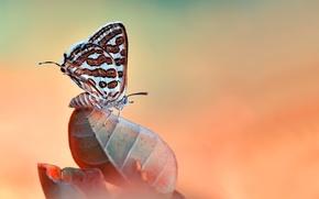 Картинка макро, природа, лист, бабочка, насекомое