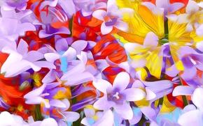 Обои цветы, лепестки, краски, линии