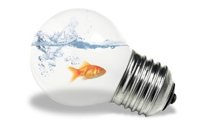 Обои белый, вода, рыбка, лампочка