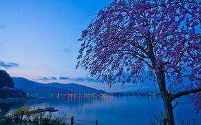Обои рассвет, сакура, Lake Kawaguchi, озеро, дерево, огни, Япония, горы, озеро Кавагути, Japan, утро