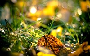 Обои трава, осень, листья
