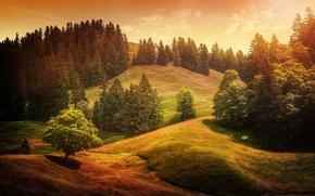 Картинка деревья, холмы, обработка, Alpine waves