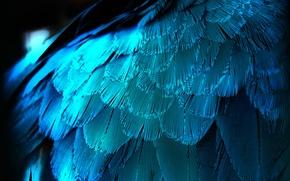 Картинка макро, перо, перья, крыло, синяя
