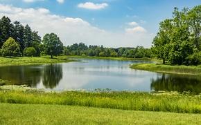 Обои зелень, лето, трава, солнце, деревья, пруд, парк, США, Northern Illinois, Morton Arboretum