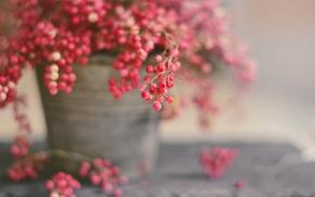 Картинка макро, ягоды, фон