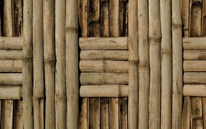 Картинка wall, pattern, bamboo