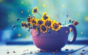 Картинка макро, цветы, доски, лепестки, чашка