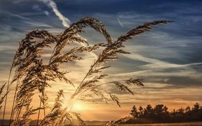 Картинка небо, трава, закат