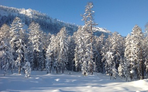 Картинка зима, лес, снег, деревья, пейзаж, природа, фото, гора, Дальний восток