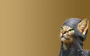 Картинка Cat, Green Eyes, Chainmail