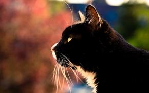 Картинка глаза, кот, усы, фон, профиль