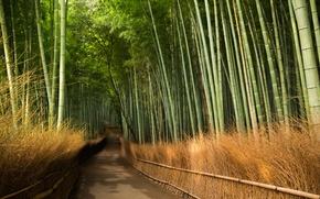 Картинка дорога, бамбук, Kyōto