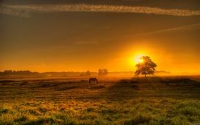 Картинка поле, закат, конь