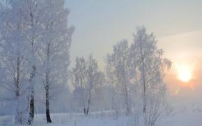 Обои зима, снег, утро, берёзы