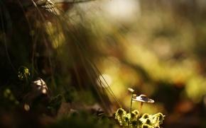 Картинка трава, свет, блики, фон, мох, тень, размытие, Гриб
