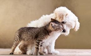 Картинка кошка, любовь, котенок, щенок, love, puppy, kitten, Friends, small dog and cat together, Друзья, маленькая …