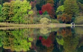 Картинка осень, лес, деревья, природа, озеро, Англия, Великобритания, England, United Kingdom, caeciliametella Photography, Grasmere