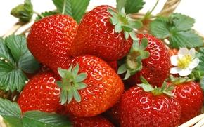 Обои ягоды, корзина, еда, клубника, листья