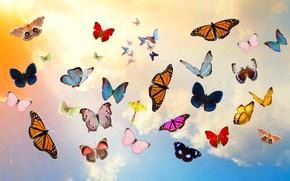 Картинка небо, облака, бабочки, коллаж
